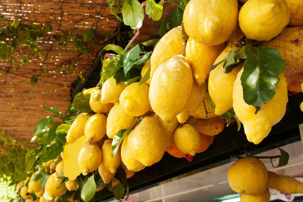 Il limoncello di sorrento doc la tua italia for Coltivare limoni