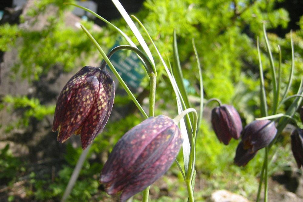 Альпийский сад Пьетро Корва / Фото: oltrexpo.com