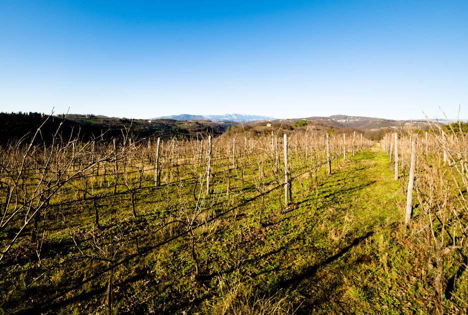 Виноградники Вальполичеллы. Фото / Shutterstock.com