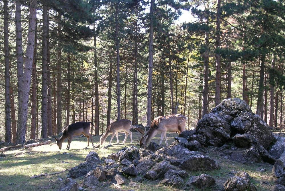 Альпийский сад Пьетро Корва / Фото: talianbotanicalheritage.com