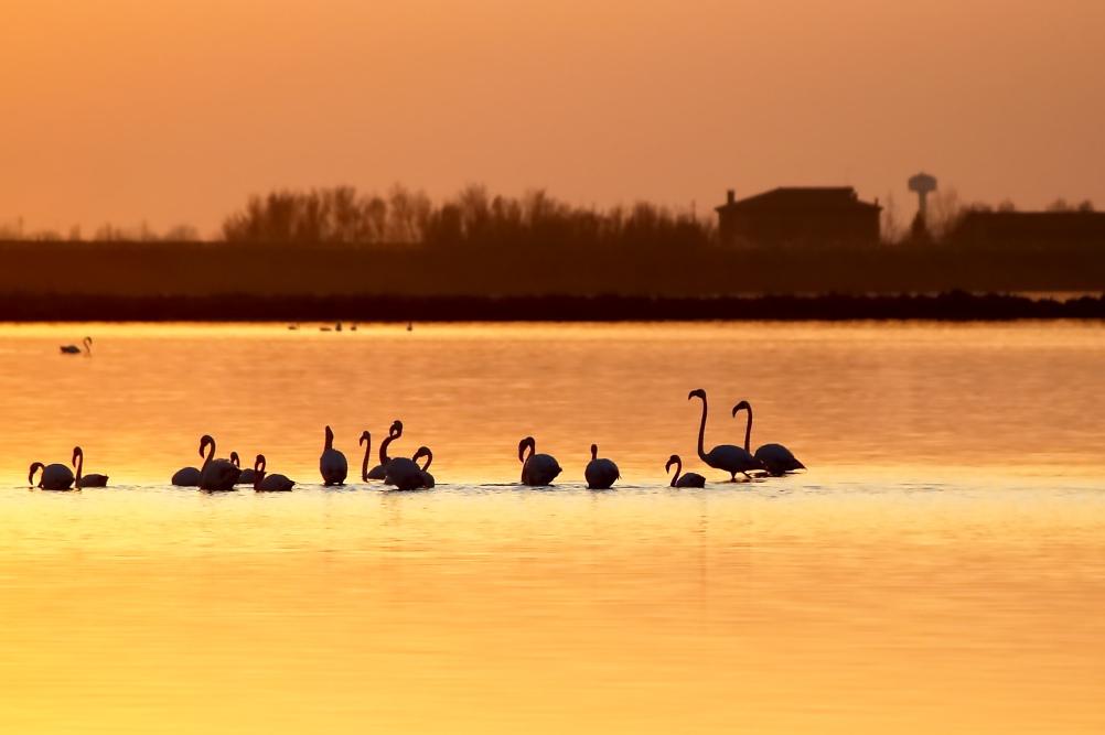Rosolina Mare / Foto: Flickr.com