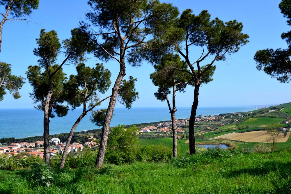 Pineto / Foto: Flickr.com