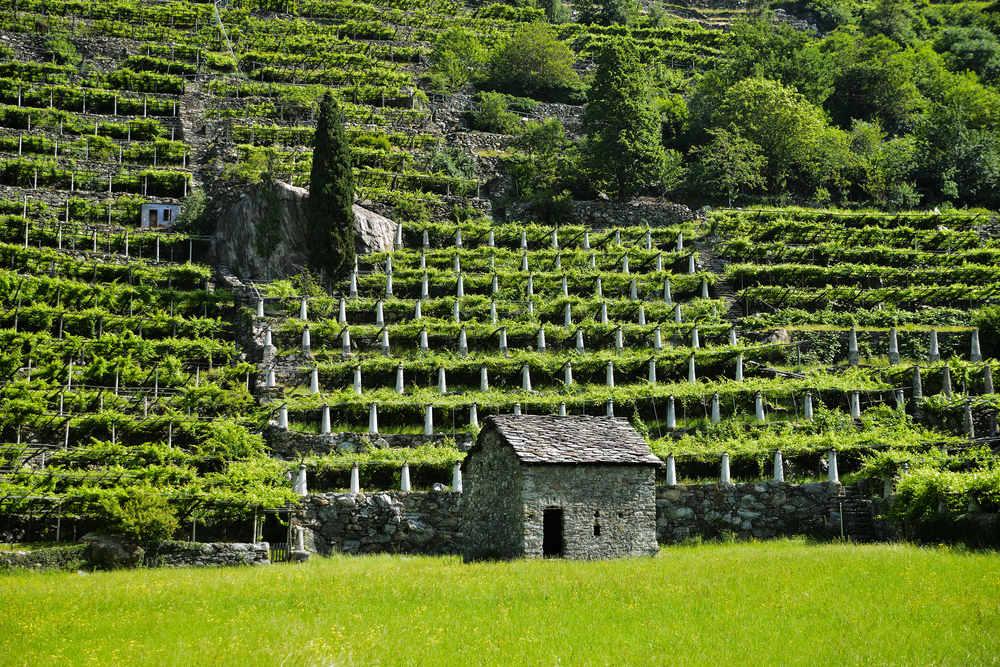 Valle d'Aosta DOC
