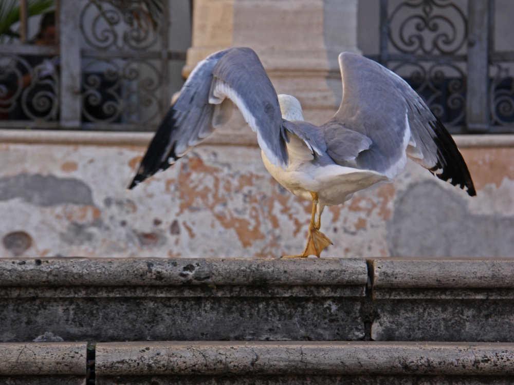 Le scale davanti alla Basilica San Pietro in Vincoli, Roma © Vladislav Fliarkovsky