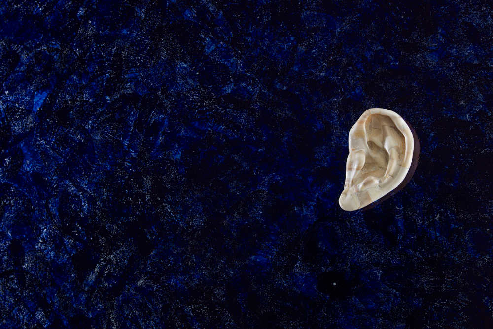Jan Fabre, detail (Bone ear), 1988, Abbazia di San Gregorio